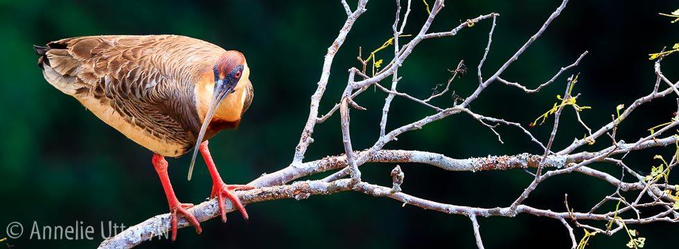 fotoresa-till-sodra-pantanal-