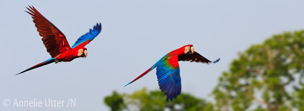 fotoresa-till-sodra-pantanal_20151021_norra-pantanal_1DX_8626