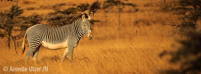 fotosafari Kenya