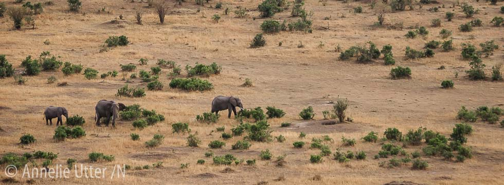 fotosafari kenya elefant