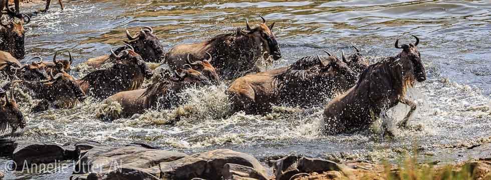 fotosafari kenya_20151002_safari_kenya_1DX_3615