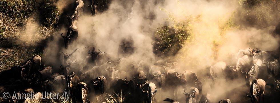 fotosafari kenya_20151003_safari_kenya_1DX_4454