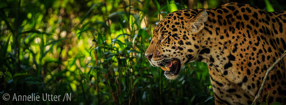 Fotoresa till Pantanal