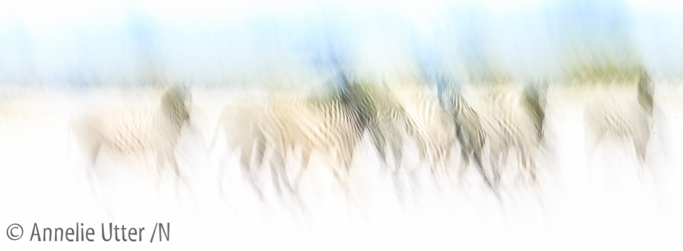 Fotosafari Botswana