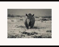 Fototavla Trubbnoshörningen Lake Nakuru National Park - ram