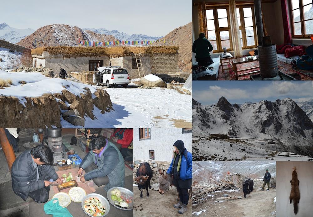 Ladakh - Ule Dehli snöleopard och tigersafari