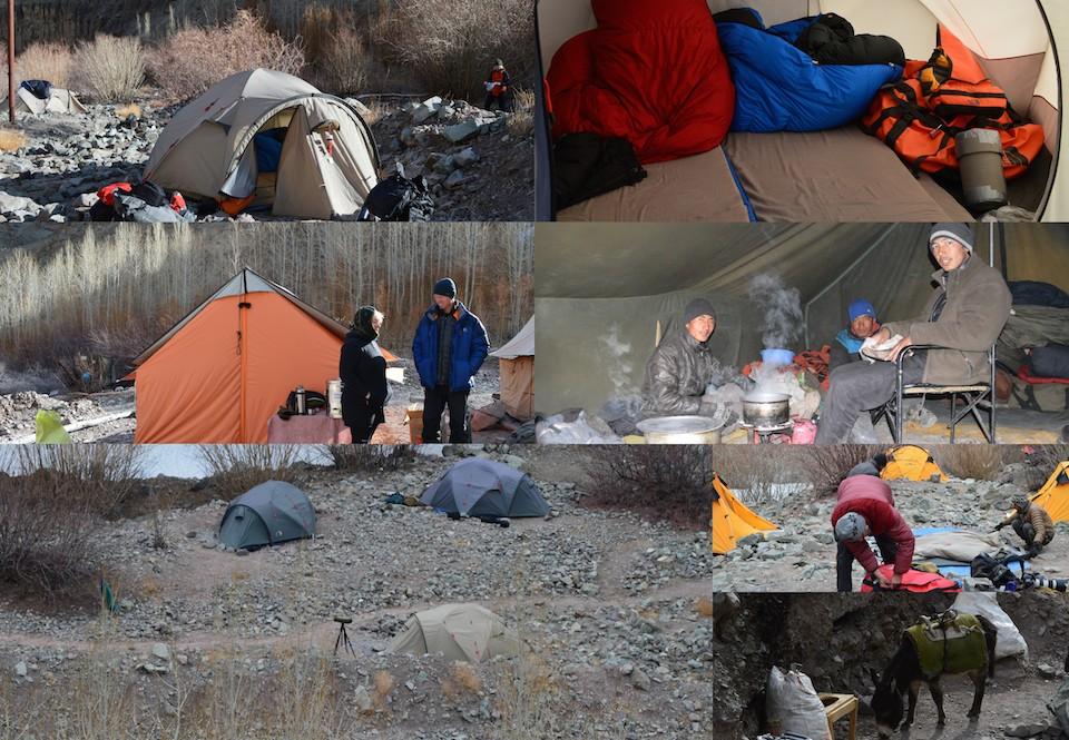 Ladakh - tältliv Dehli resedagbok snöleopard och tigersafari