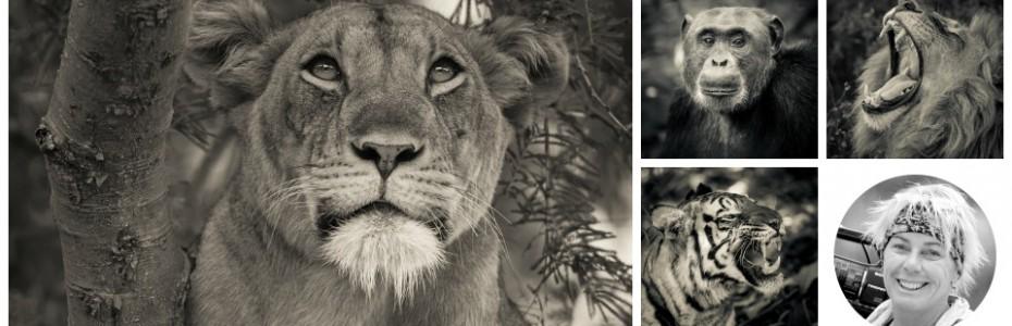 föredrag safariresor