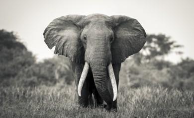 elefant annelie Utter abecita konstmuseum