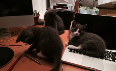 katter på datorn