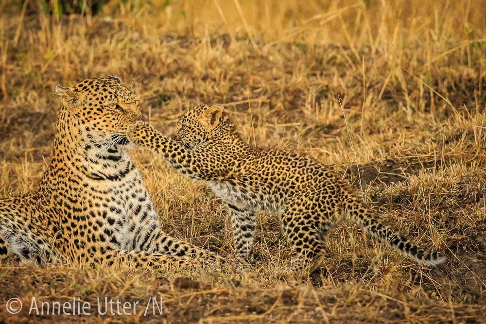 20150929_safari_kenya_1DX_1609