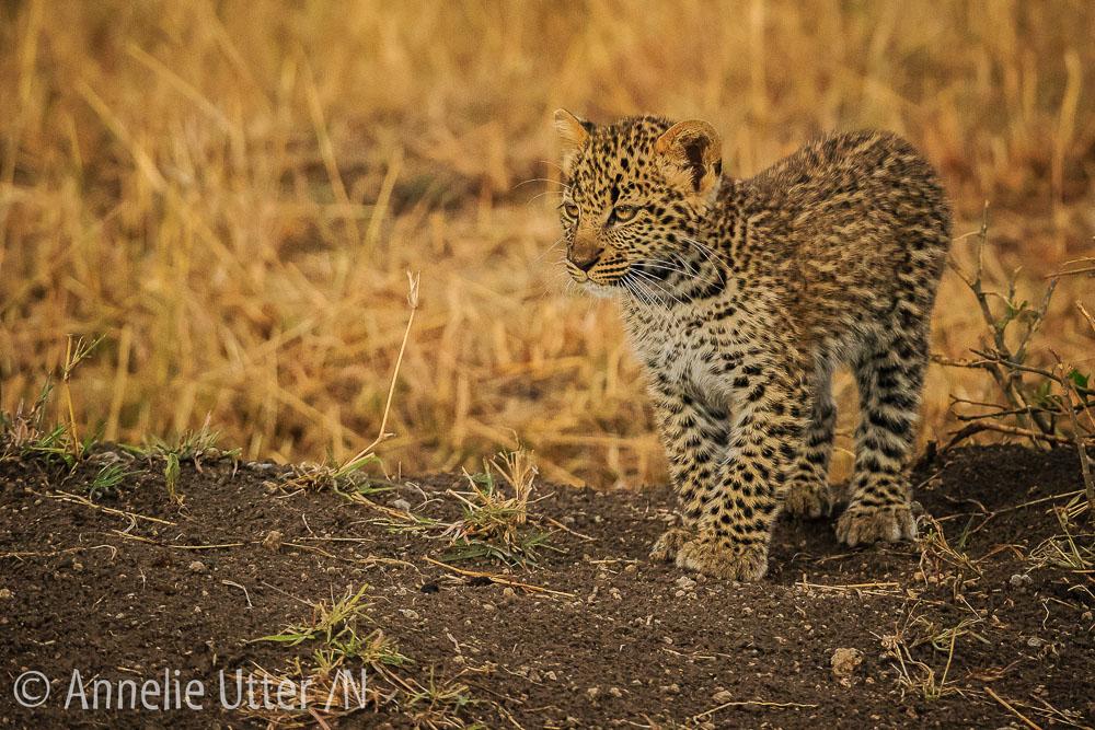 safari_kenya