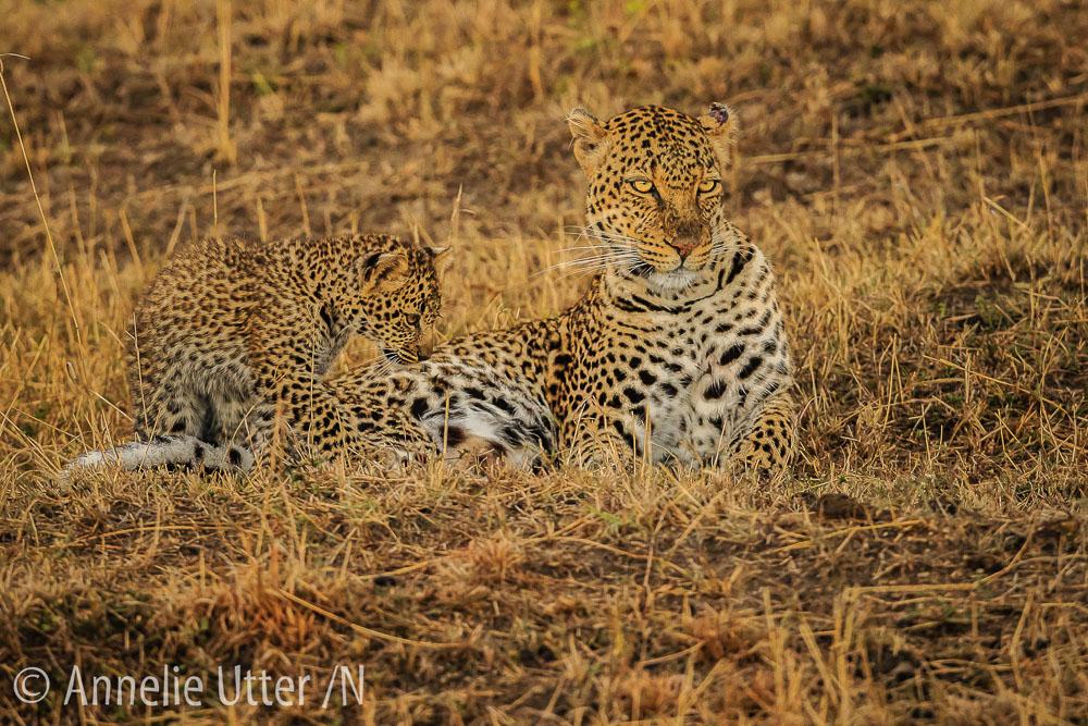 20150929_safari_kenya_1DX_1803