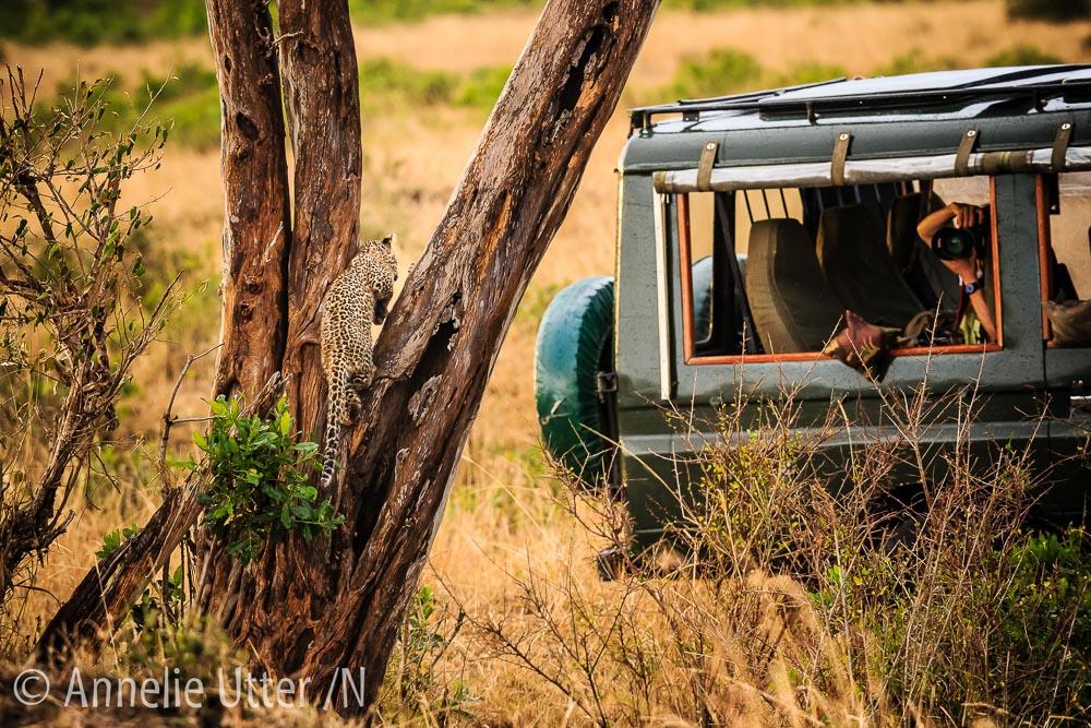 Bra fotoläge Kenya
