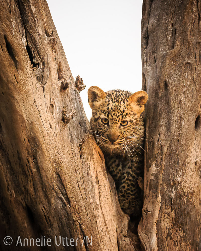 20150929_safari_kenya_1DX_2275