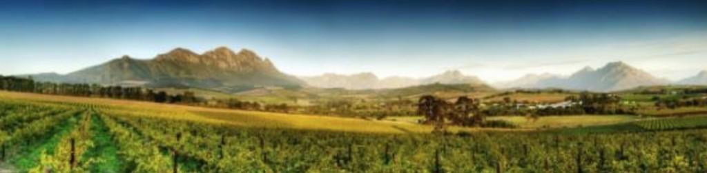 Kap områdets äldsta vinområden
