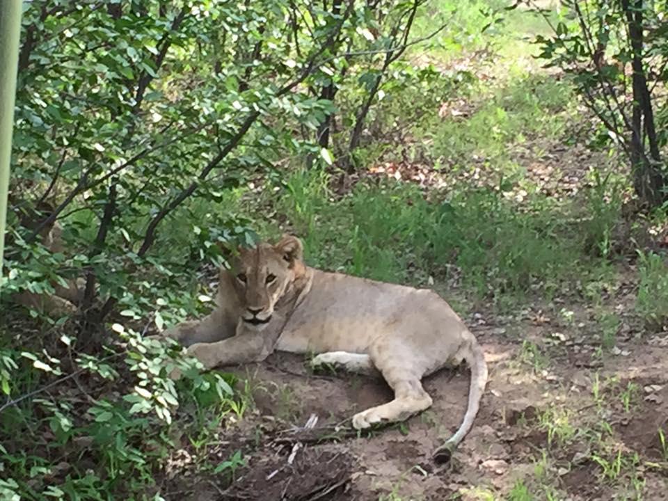 etosha-national-park-namibia02