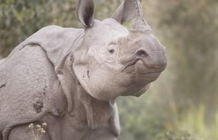 pansarnoshörning fotoresa Kaziranga National Park