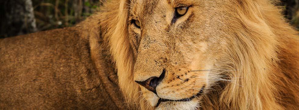 fotosafari kenya_20150930_safari_kenya_1DX_2416