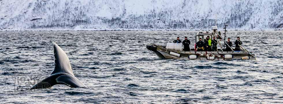 späckhuggarsafari i Nordnorge