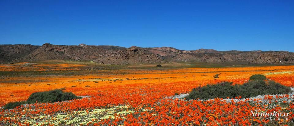Fotografera i Sydafrika Namaqualand