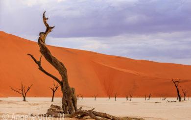 Fotosafari-Namibia