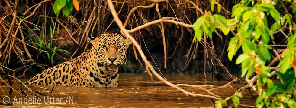 fotoresa pantanal