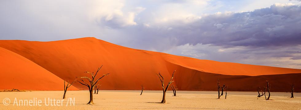 Fotosafari Namibia