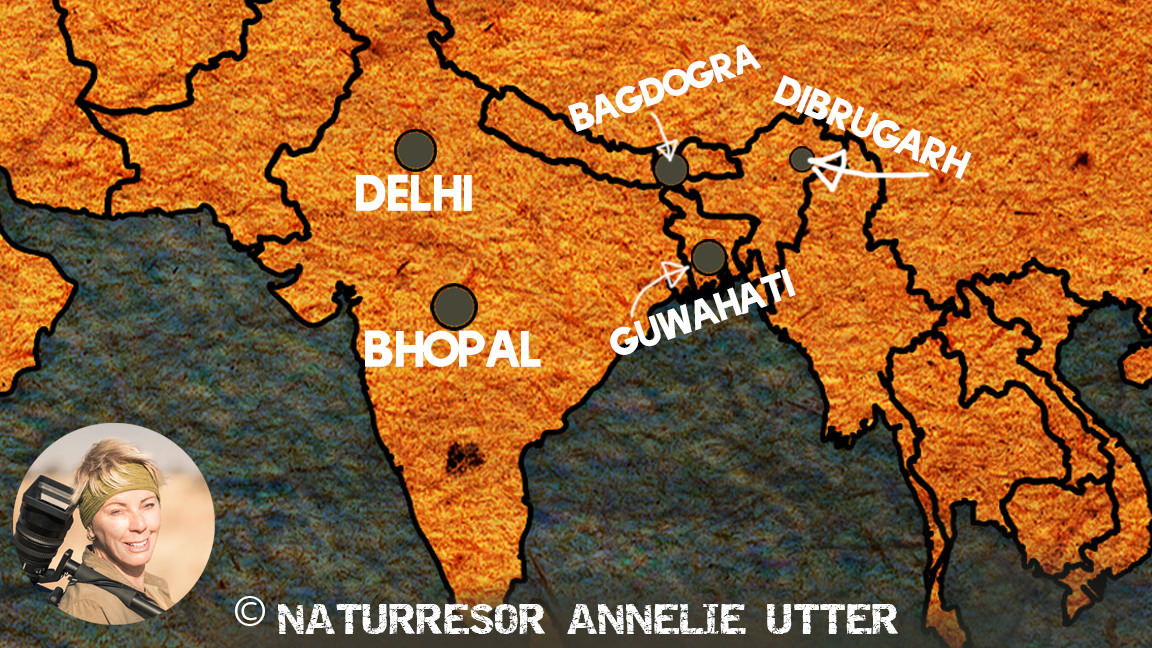 karta map red panda bhopal guwahati bagrogra dibrugarh