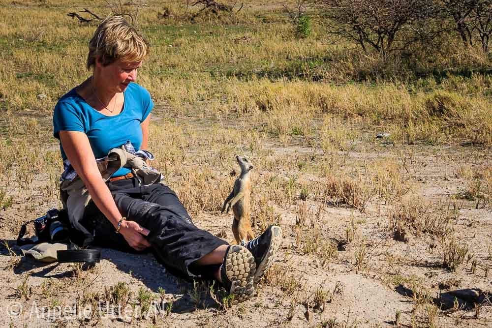 Vi fotograferar surikater i Botswana