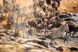 1000px_20151002_safari_kenya_1dx_3664