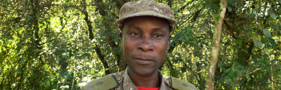 Bildgalleri Uganda Bergorillor Safari